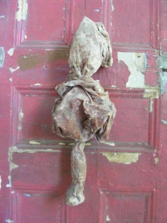 """Internal Organ"" shot by Masha Avina"